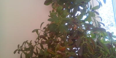 Подскажите, что это за растение? Можно ли его обрезать?