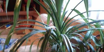 Помогите с названием этих растений, пожалуйста!
