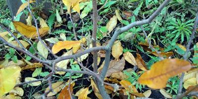 Какие растения несложно вырастить из черенков
