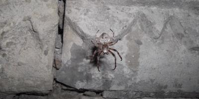 Помогите определить вид паука
