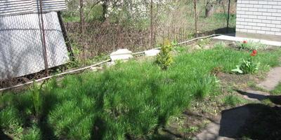 Помогите красиво озеленить кусочек участка!