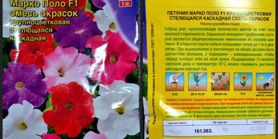 Петуния Марко Поло F1 смесь окрасок. IV этап. Развитие растений и уход за ними