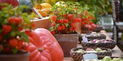 В Аптекарском огороде расцветут «Краски осени»