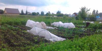 Домашнее задание №2: особенности моего огорода