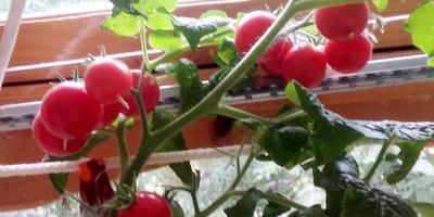 Домашнее задание №7: мой огород на подоконнике