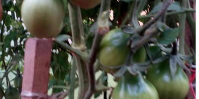 Домашнее задание №3: теплицы – помощники в борьбе за урожай