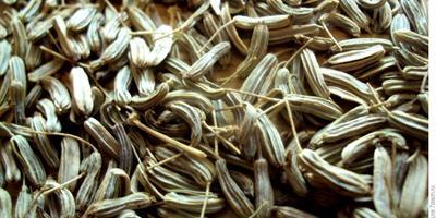 """""""Самые необходимые"""" семена, или Семеномания - это не болезнь"""
