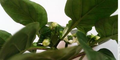 Домашнее задание №7:  несколько причин в защиту домашнего огорода