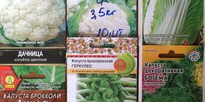 Домашнее задание №11: выращивание рассады капусты в теплице