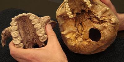 Кто был первым вегетарианцем? От растительной диеты неандертальцев до «Диеты для маленькой планеты»