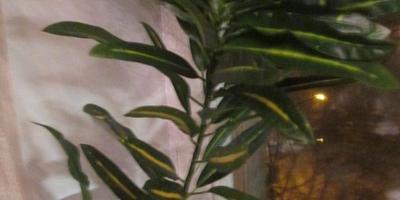 Как называется это растение, как за ним ухаживать и как размножать?