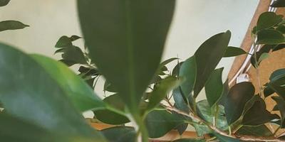 Как это растение называется и как за ним ухаживать?