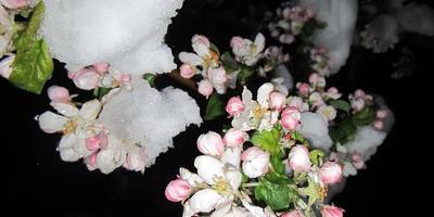 Крым засыпало снегом! Похоронила свои растюшки...