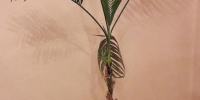 Подскажите название растения. Как его лечить?
