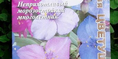 Тающий мотылёк или традесканция Виргинская/Андерсона (садовая)