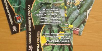 Спасибо за подарок - за шикарный набор семян огурчиков!