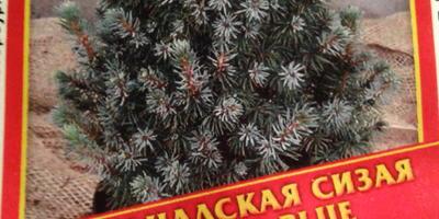 Гидрогель «Счастливый дачник». Тест: стратификация семян ели – первые корешки