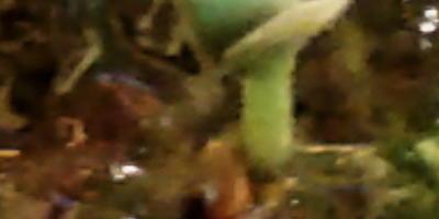 Гидрогель «Счастливый дачник». Тест: проращивание семян розмарина