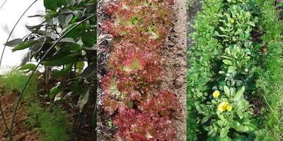 Домашнее задание №12: выращивание зеленных культур