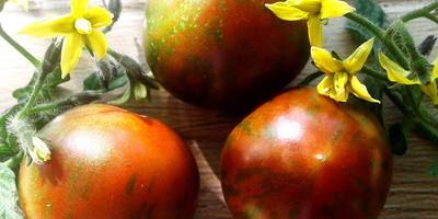 Томат Полосатый рейс - украшение участка с вкусными, сладкими, ароматными плодами