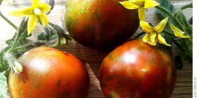 Группа тестирования овощей и зелени фирмы Гавриш, готовимся к завершению!