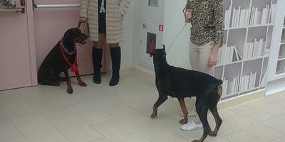 Сегодня попал на выставку собак