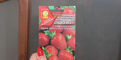 Попробовала я клубничку из семян проращивать)