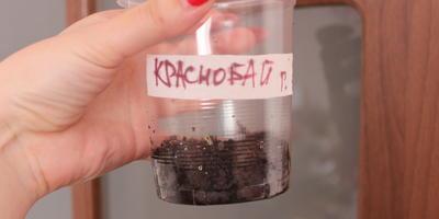 Хороший пример заразен, или Тестим томаты разных сортов и фирм. Томаты Гавриш