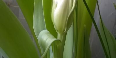 Цветы к женскому дню