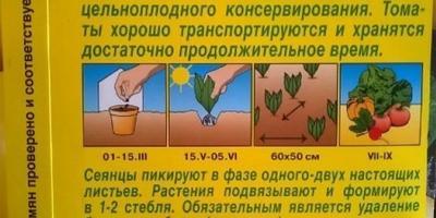 """Томат """"Цитрусовый сад"""" (Аэлита). I этап. Тест на всхожесть"""