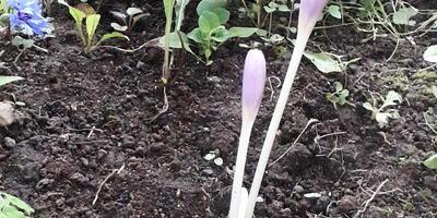 Что за цветочки начали расти в саду?