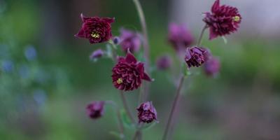 Обновки в саду и цветочные мечты