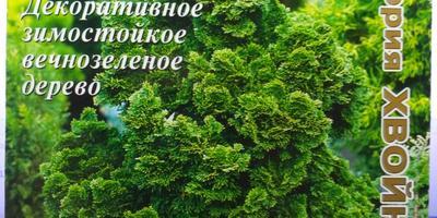 Как правильно подготовить семена кипарисовика туполистного к посадке?