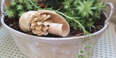 Что это за растение и как его вылечить?