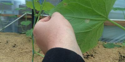 Помогите вылечить растение!