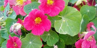 Сад-огород-цветник