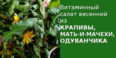 Витаминный салат из одуванчиков, крапивы, мать-и-мачехи