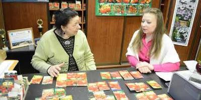 """Гибриды томатов: супербомба от """"Ильиничны"""""""