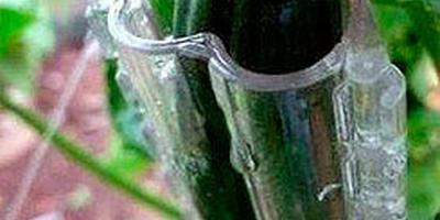 """Корсет для огурца, или Форма-контейнер для выращивание огурцов """"Сердце"""""""