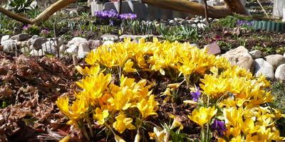 Сад для души весной, часть 1