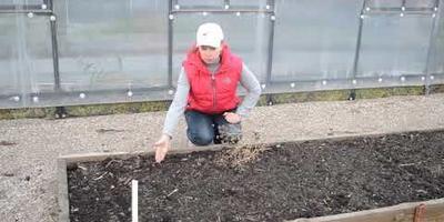 Посев под зиму: что сеять будем?