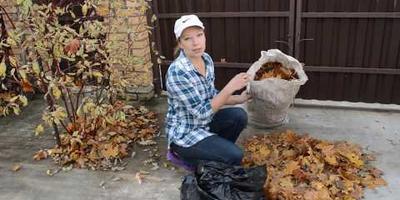 Что делать с листьями: полезные советы