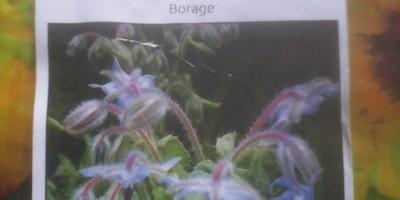 Бораго - красивый пушистик