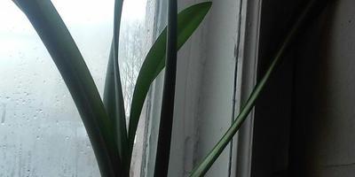Подскажите, что это за растение