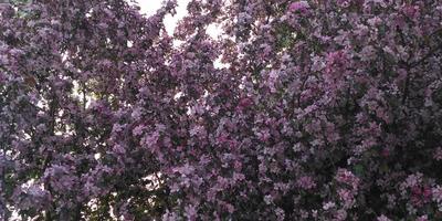 А скоро будут яблони в цвету...
