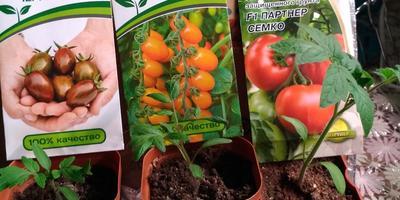 Другие семена фирмы Партнер