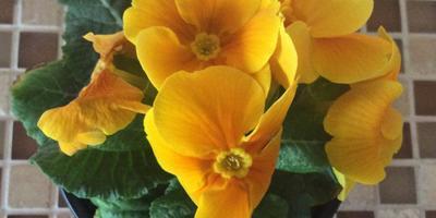Подскажите, что это за цветок и какого он вида?