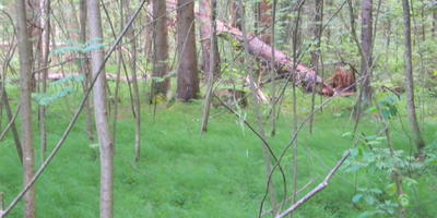 Воскресная прогулка по лесу