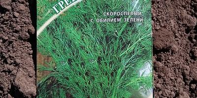 Укроп Гренадер. Тест на всхожесть