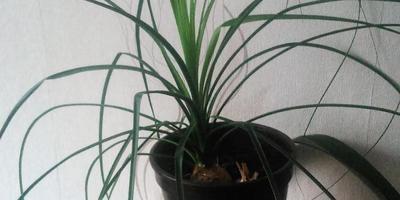 Как называются эти растения?